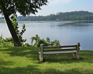 Photograph of Tree, Bench and River Copyright © 2016 by Susan Hooper