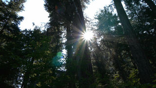 Sun shines through forest. Used by permission from Dorcon Films.