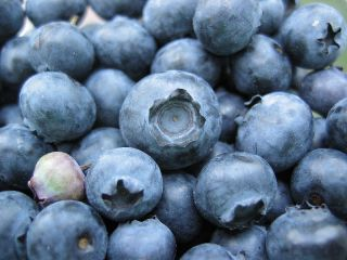 blueberries/wikimedia commons