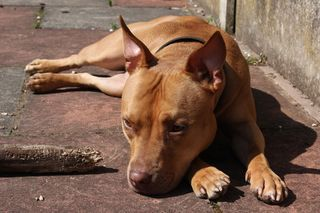 Incomplete Endings: Coping With a Runaway or Lost Pet | Psychology Today