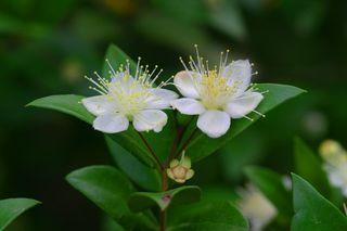 fleuryste/Pixabay