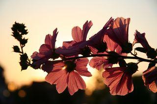 hesnikof/Pixabay