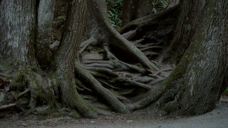 "Tree roots ""talk."" Used by permission from Dorcon Films."