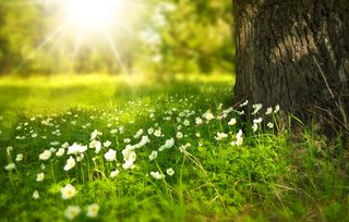https://pixabay.com/en/spring-tree-flowers-meadow-wood-276014/