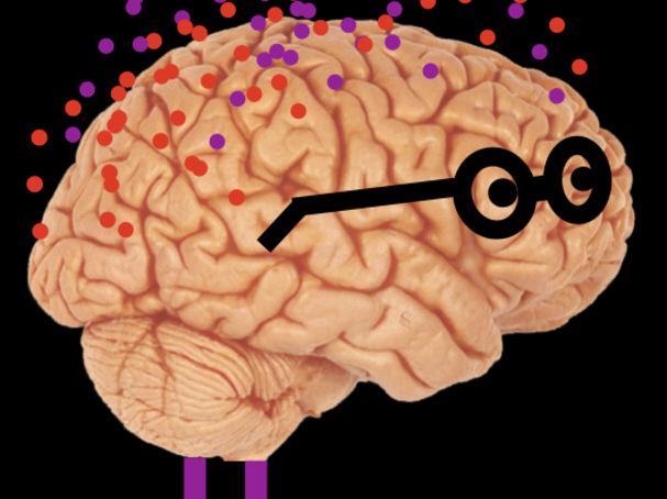 electric shock areas of the brain pleasure