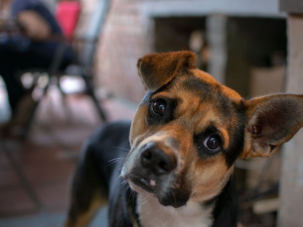 How Dogs Hear and Speak With the World Around Them | Psychology Today