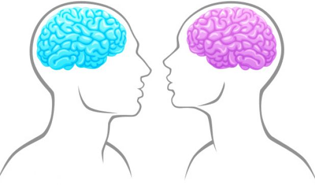 The Myths of Male and Female Brains