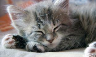 The Mystery of Deep Sleep