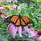 A New Year: 5 Lessons We can Learn from a Butterfly
