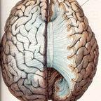 Sperry, Jenkins: Left Brain, Right Brain