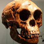 The Latest on the Littlest Brains in Human Evolution