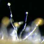 Let's get amoebic:  The charitable slime mold as a model for facing climate change