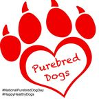 It's National Purebred Dog Day