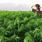 Update on Addiction, Marijuana and Legalization