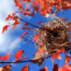 Will Your Empty Nest Be Boomeranged?