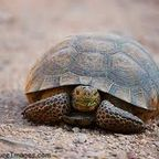 Why Slow is Good: Lessons from a Turtle