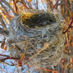 Midlife Eating Disorder Triggers III: Empty Nest