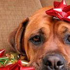 The Psychology of the Christmas Bonus