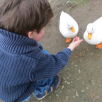 """Boy_Feeding_White_Ducks"" by Barelyhere, licensed under CC BY 2.0"