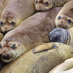 from Wikipedia public domain