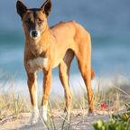 australian wildlife free images