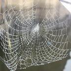 David B. Seaburn/Spider Webs in Maine