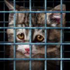 Why Do Animal Shelter Workers Burn Out?