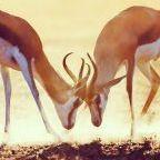 Johan Swanepoel / shutterstock.com