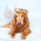 What Kinds Of People Believe Animals Go To Heaven?