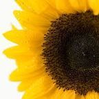 public-domain-image.com