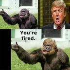 Understanding Primates – and Donald Trump
