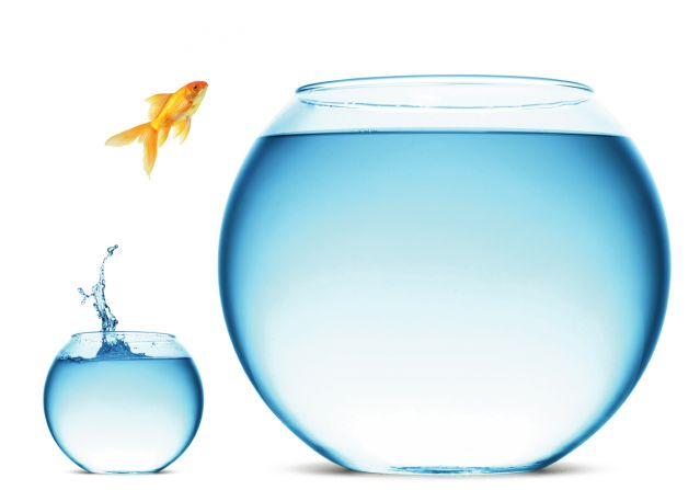 Goldfish jumping from small fishbowl to larger