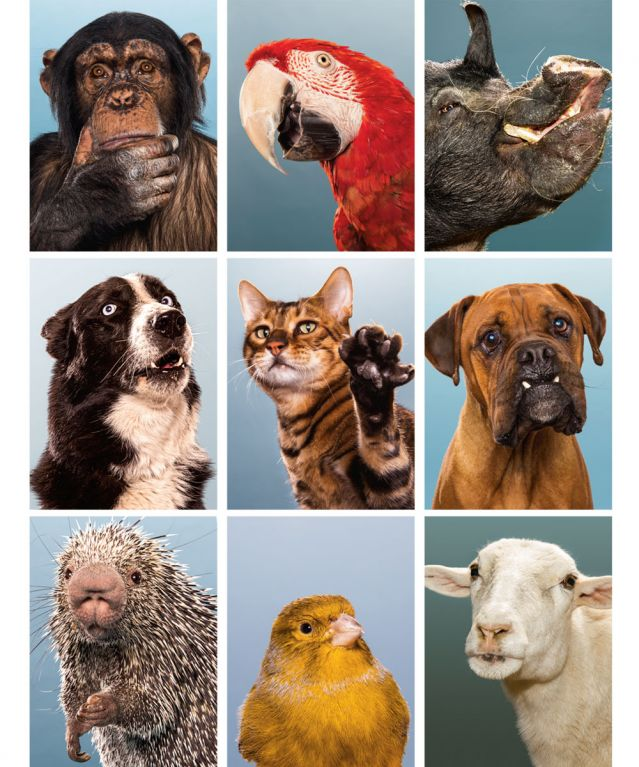 Collage of wild, domestic and farm animals