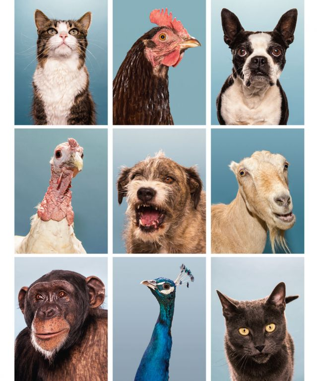 Collage of domestic, wild and farm animals