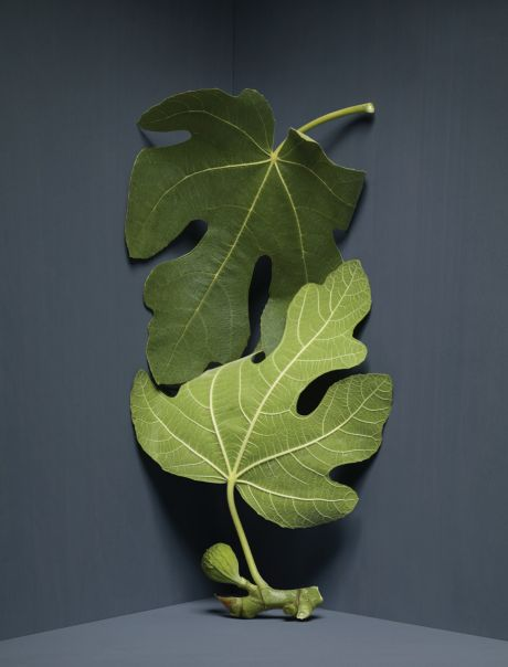 Two green leaves in the corner of a room