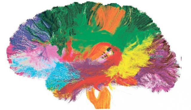 Are We About to Map the Entire Human Brain? | Psychology
