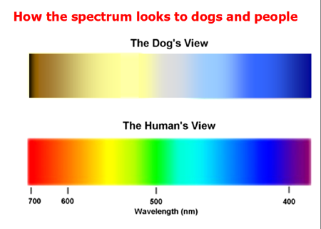 Can dogs see colors psychology today for What color do you like