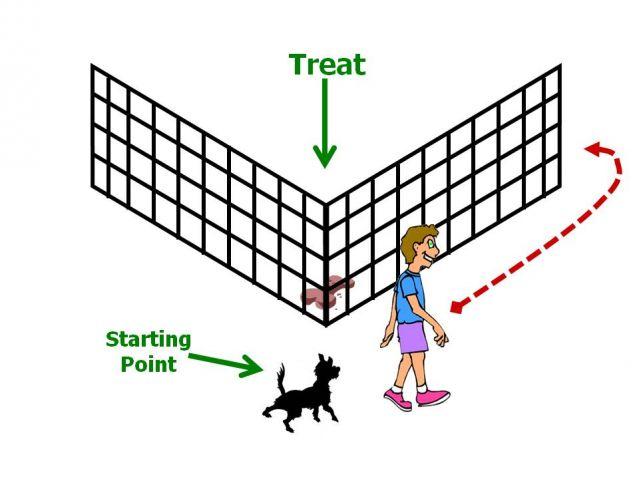 dog canine learning modelling detour barrier problem