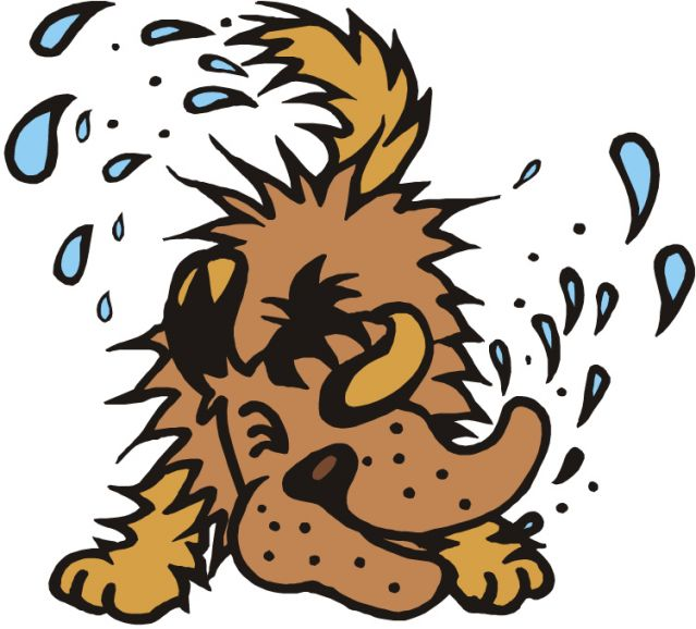 Science Looks At Why And How Wet Dogs Shake  Psychology Today-8865