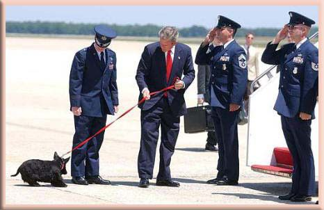 barney bush white house dog president air force one