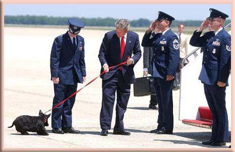 barney bush white house dog president air force one