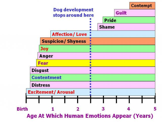 dog emotion canine age development feelings love joy anger fear guilt surprise