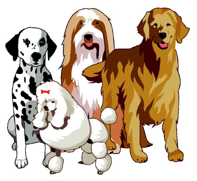 Dog Ate Corner Of Rug: How Many Breeds Of Dogs Are There In The World