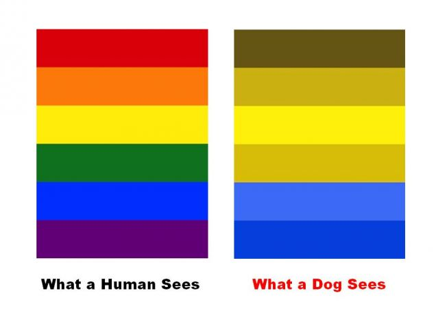 dog canine color vision perception sensation eye
