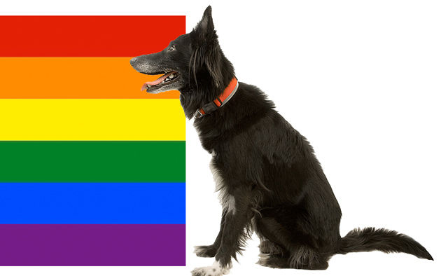 do dogs actually use color vision