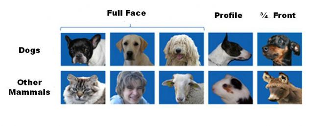dog breed recognize face canine species discrimination stimuli