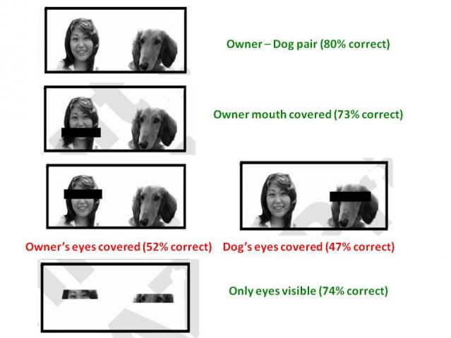 dog canine Nakajima look alike similar eyes mouth resemble similar perception