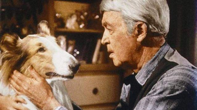 jimmy james stewart dog pet canine lassie movie emotion love