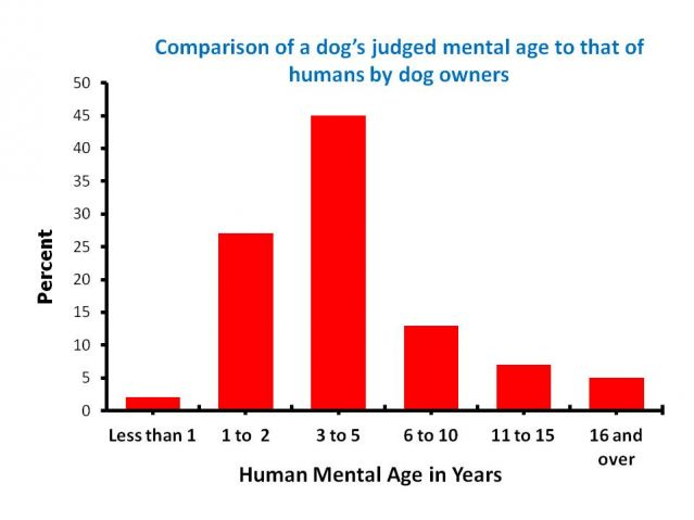 blog canine corner dogs recognize emotions just looking human face