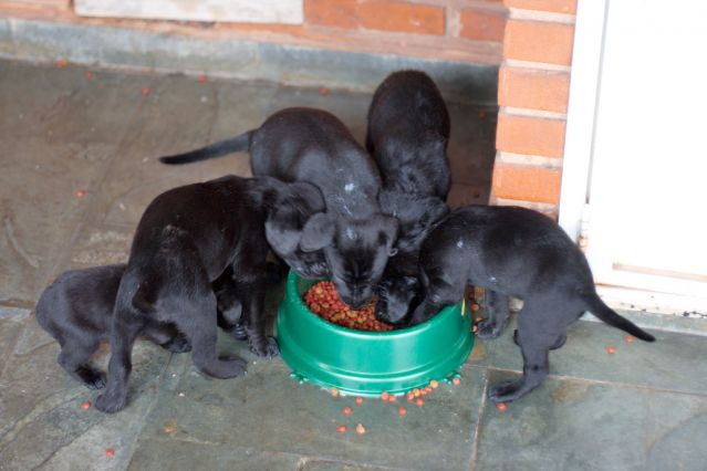 dog canine pet puppy puppies food bowl eating aggression guarding feeding